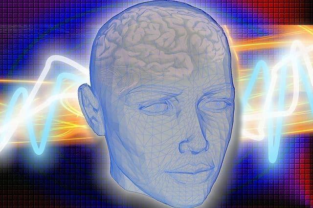 Studio sulla Plasticità Cerebrale