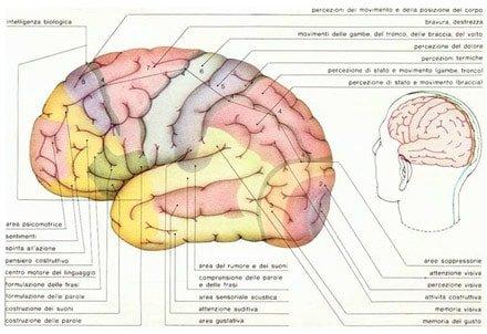 Aree Cerebrali