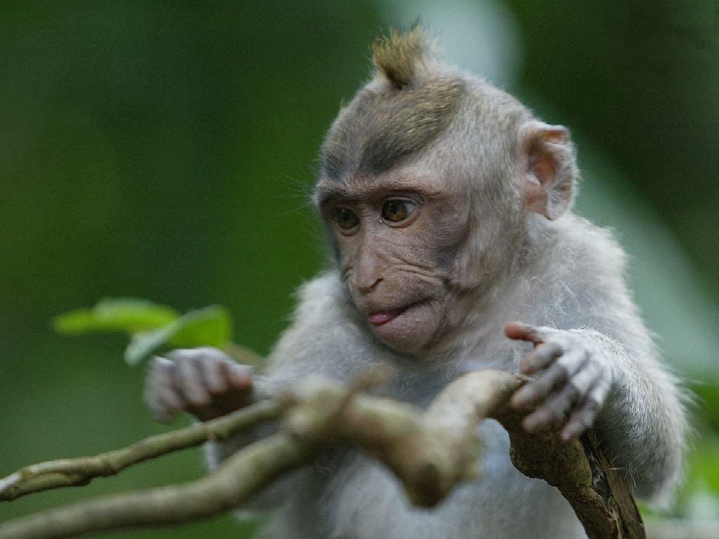 Il Sistema Talamo Striato nell'Uomo, Scimmia e Altri Mammiferi