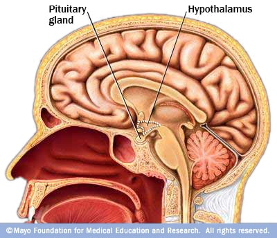 Neurofisiologia del comportamento alimentare