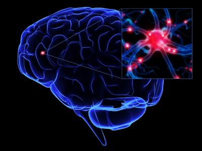 fonte: http://www.wisconsintruckaccidentlawblog.com/ uploads/image/ brain-neuron.jpg