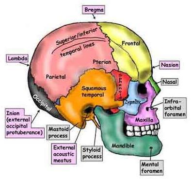 Terapia Craniosacrale Biodinamica