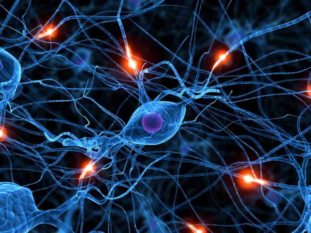 Spiegare i processi cerebrali vuol dire comprendere l'attività mentale?