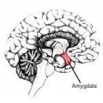 Ippocampo e Amigdala
