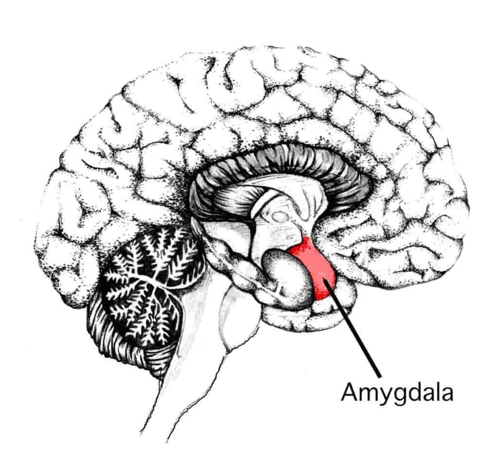 pensiero attivo, sherlock holmes, deduzione, stress, amigdala