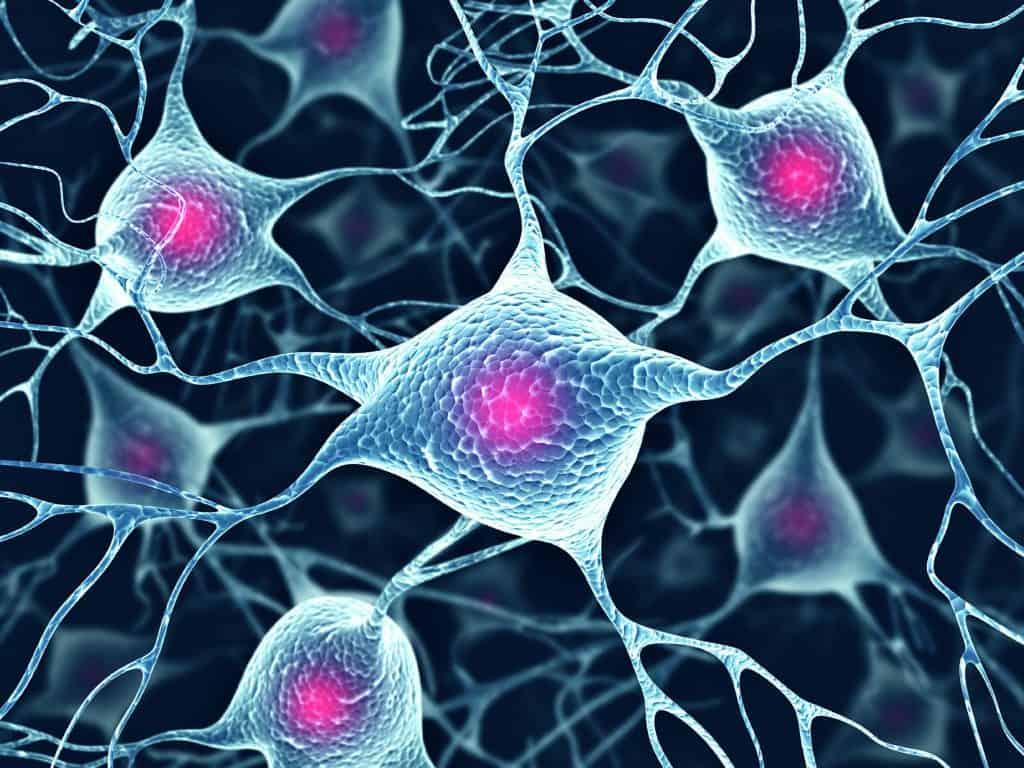 Neuroscienze, neuro-psicoanalisi e psico-neuro-endocrino-immunologia, risonanze interdisciplinari
