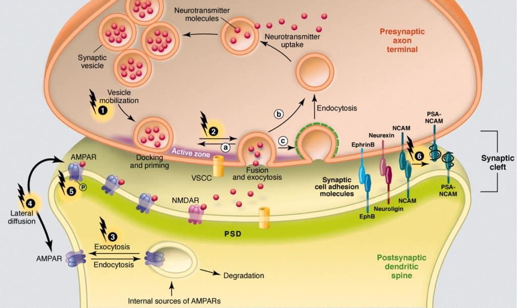 I Neurotrasmettitori