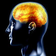 Istituto di Scienze Cognitive – programma 2013