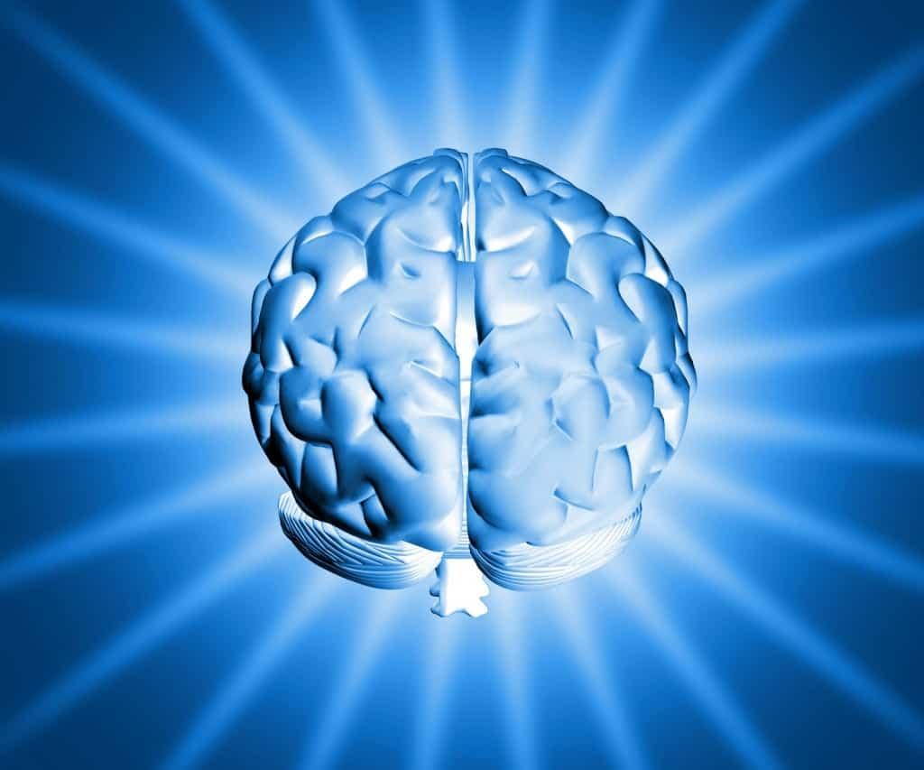 L'Anima è il nostro Cervello?
