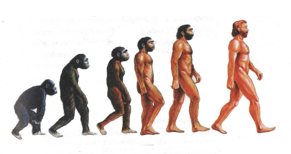 Scimmie, Ominidi, Uomo