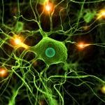 Il Paziente Affetto da Sindrome Parkinsoniana Complicata