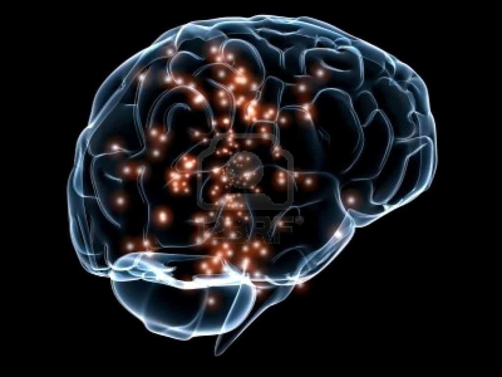 Cervello Umano e Cervello Animale – parte II