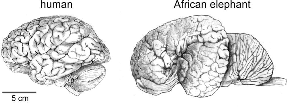 Cervello Umano e Cervello Animale – parte I