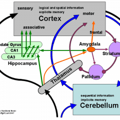 Le emozioni e le neuroscienze affettive