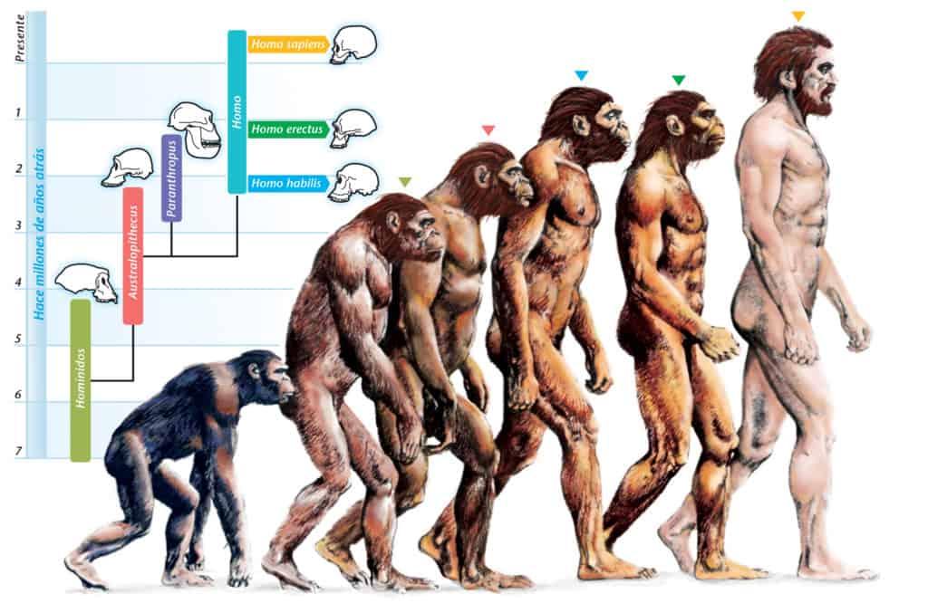 Psicologia evoluzionistica e personalità: un connubio possibile