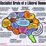 Neuropolitica: problemi e prospettive