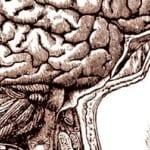 Mente-corpo e mente-cervello