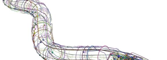 Identificata la struttura multifrattale dei neuroni