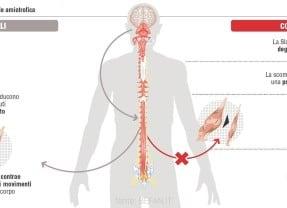 Un possibile target terapeutico per la SLA