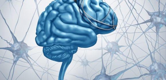 Abitare il Cervello