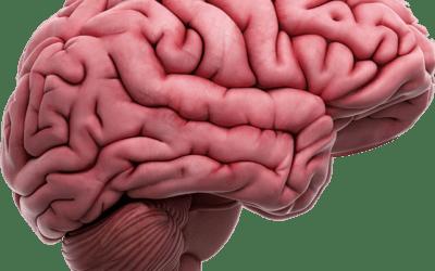 Diagnosi e Terapeuticità