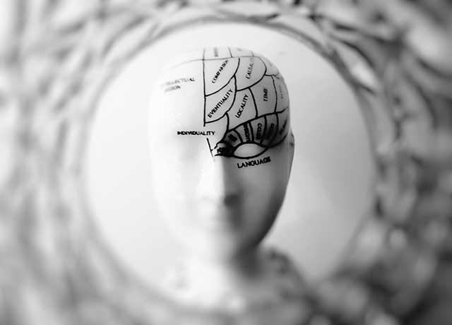 Il cervello, un laboratorio della mente