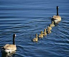 Principi di etologia del comportamento animale