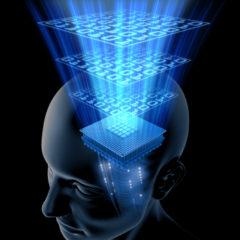 14 ipotesi sul funzionamento del cervello
