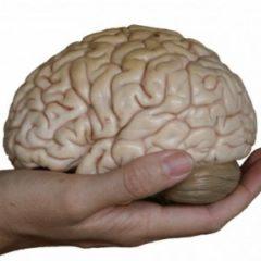 Mauro Mancia, una vita tra Psicoanalisi e Neuroscienze