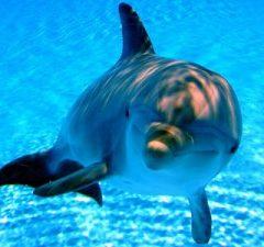 Convergenze e Divergenze Evolutive nei Delfini